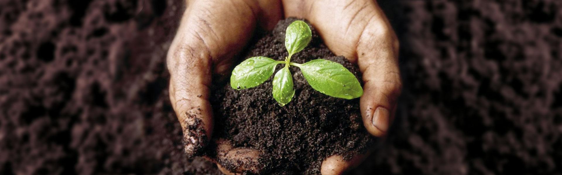 nutrimento compost